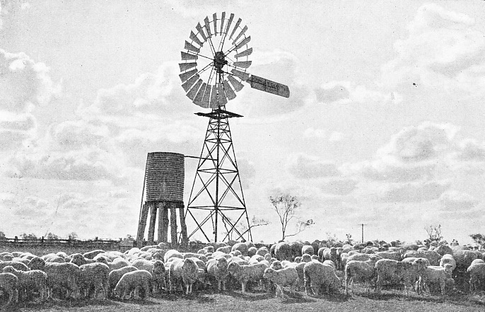The Sheep Farms of Queensland and New South Wales